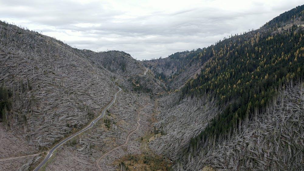 Formafantasma, Cambio, Val di Fiemme, Valley Vaia Storm