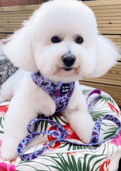 patterned dog harness