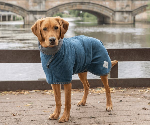 An absorbent dog coat