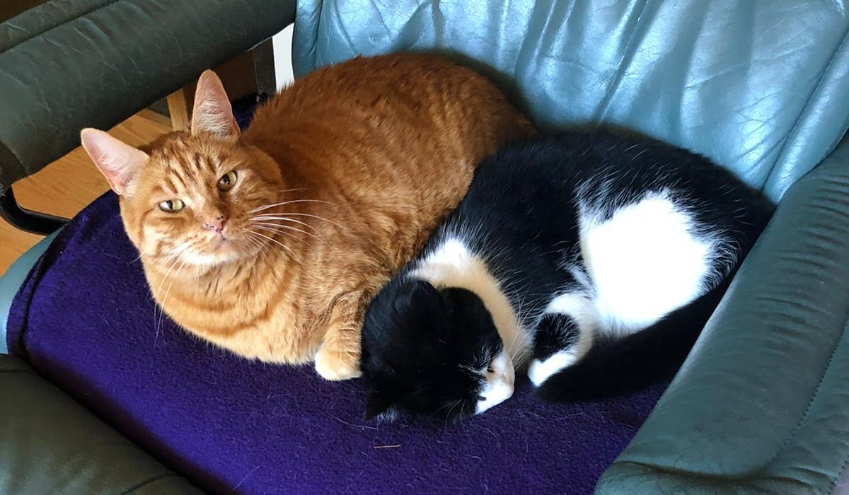 A ginger cat and a black and white cat sitting on a chair