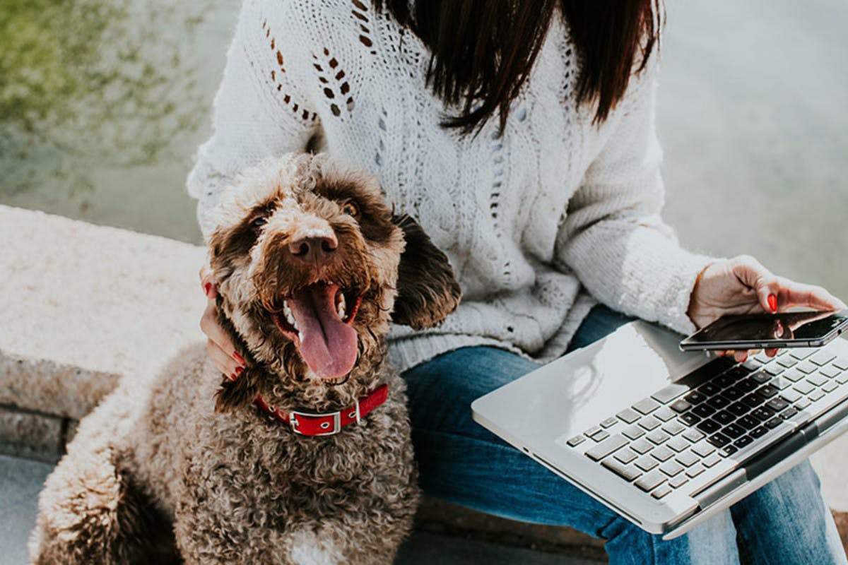 Happy pet with their owner as they explore dog sitting websites.