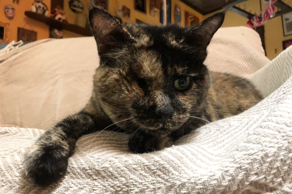 A tortoiseshell cat laying on some blankets