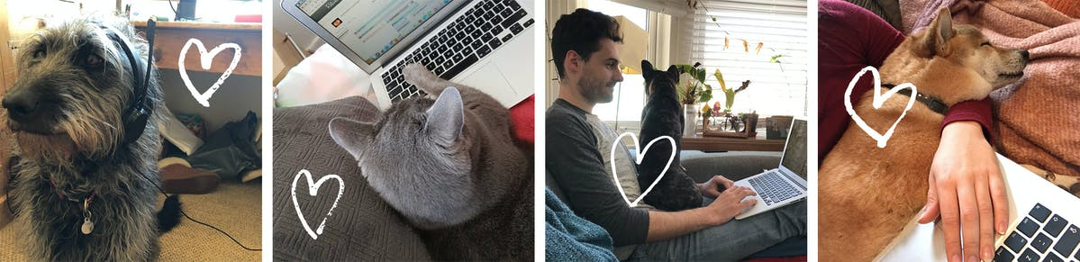 Members of the TrustedHousesitters team working from home with their pets