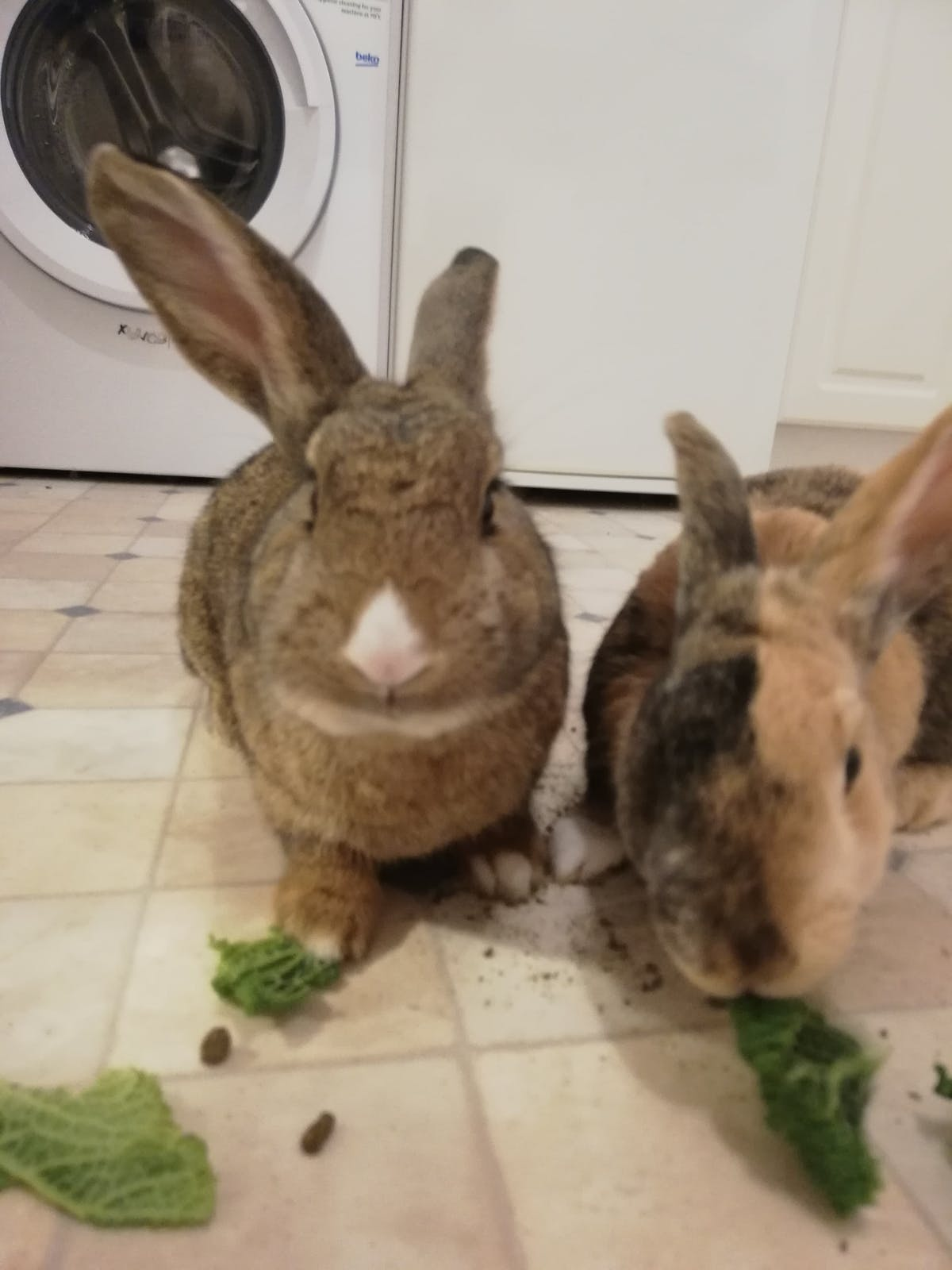 Ivor and Poppy the rescue rabbits.