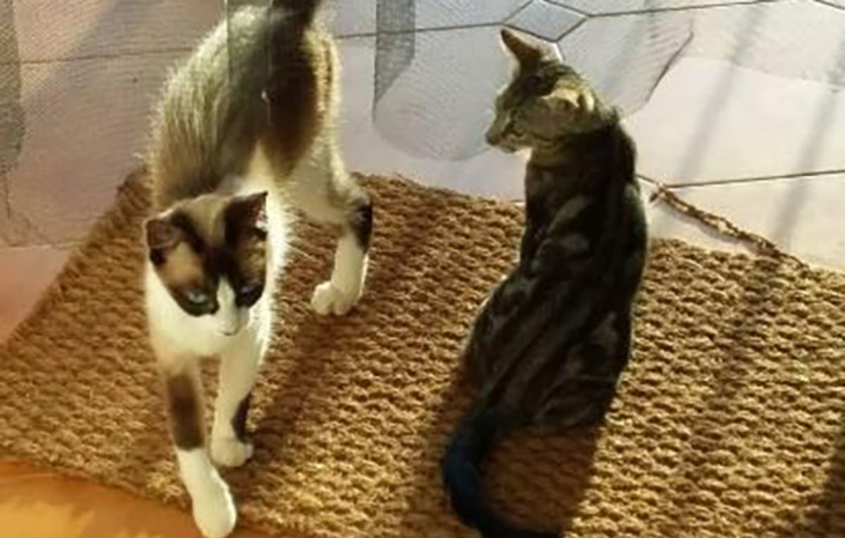 Kiki and the kitten