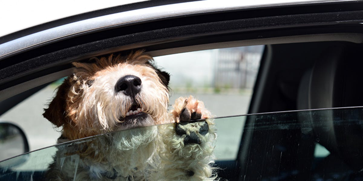 Dog in car with open window.