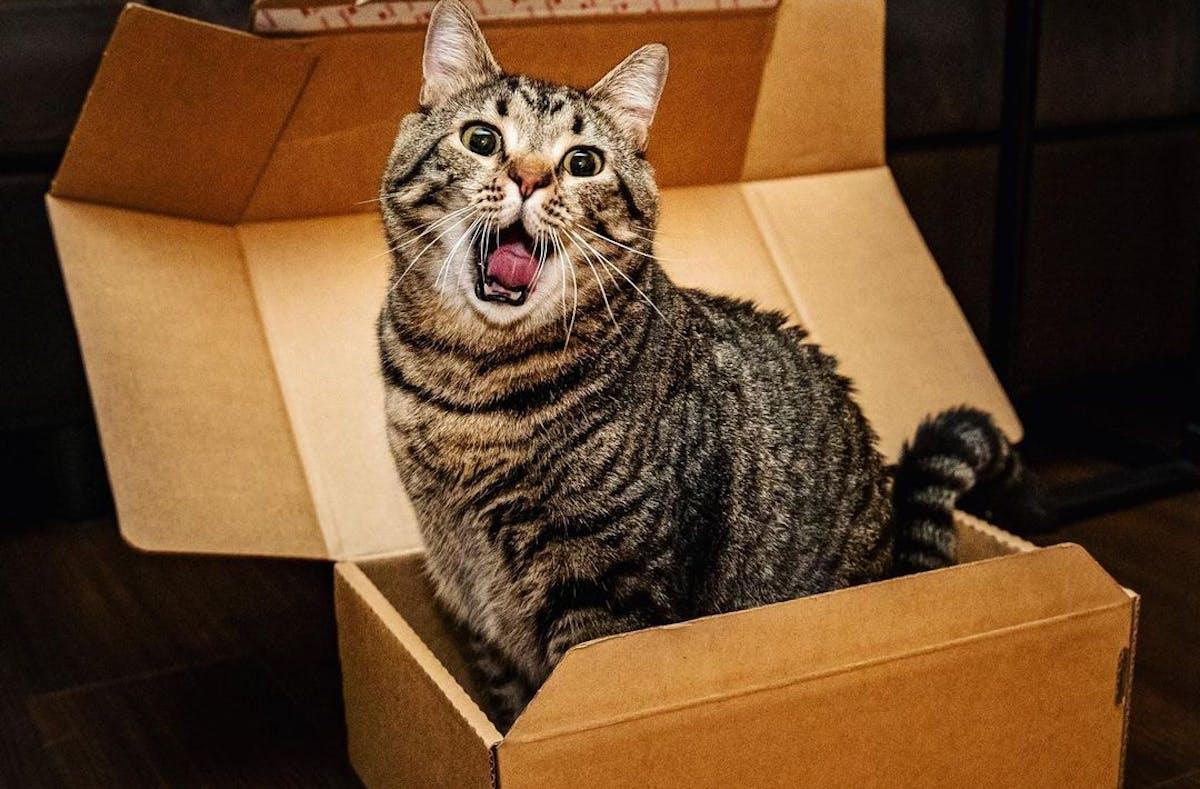 A tabby cat sitting in a cardboard box