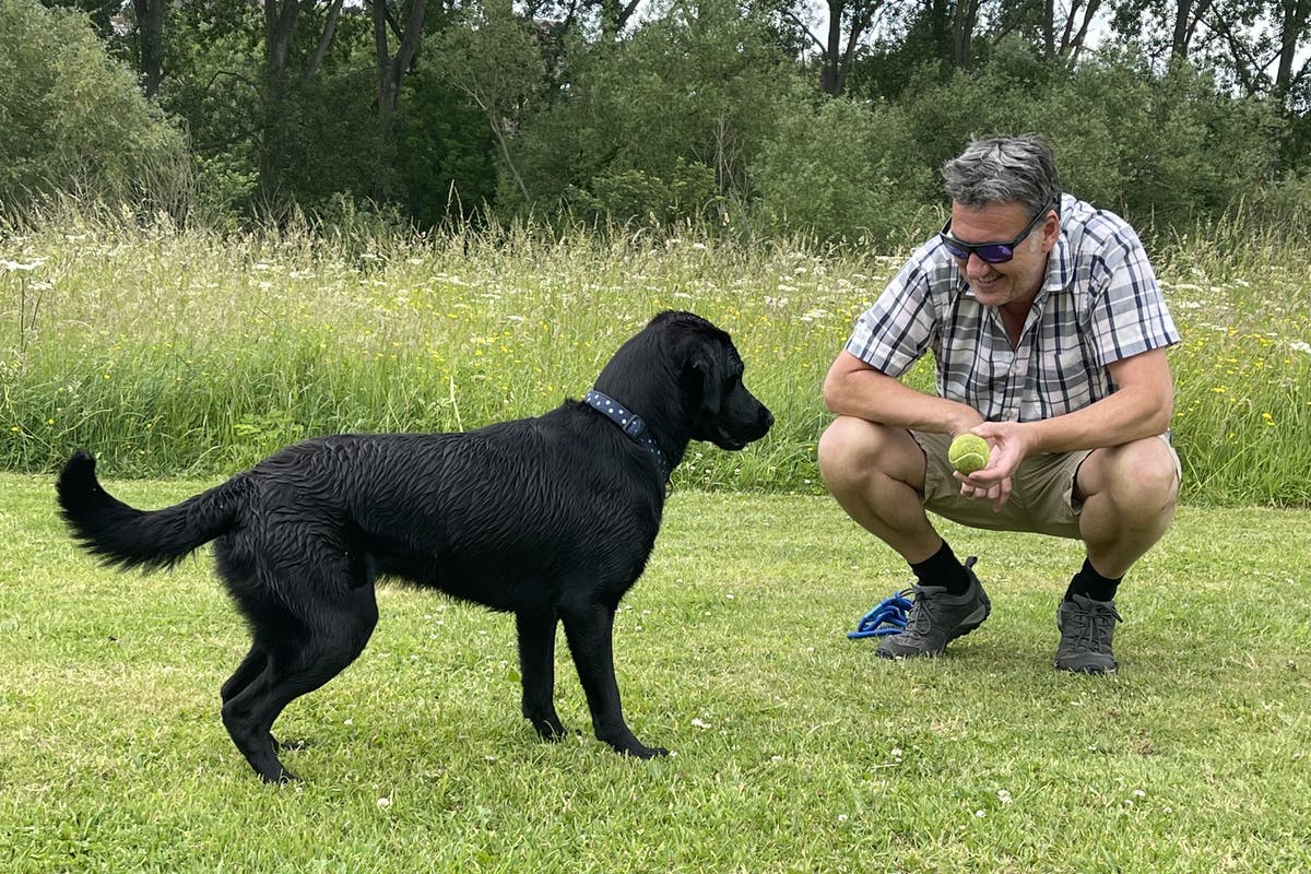 A black Labrador in a park with a man who is crouching down and presenting the dog with a tennis ball