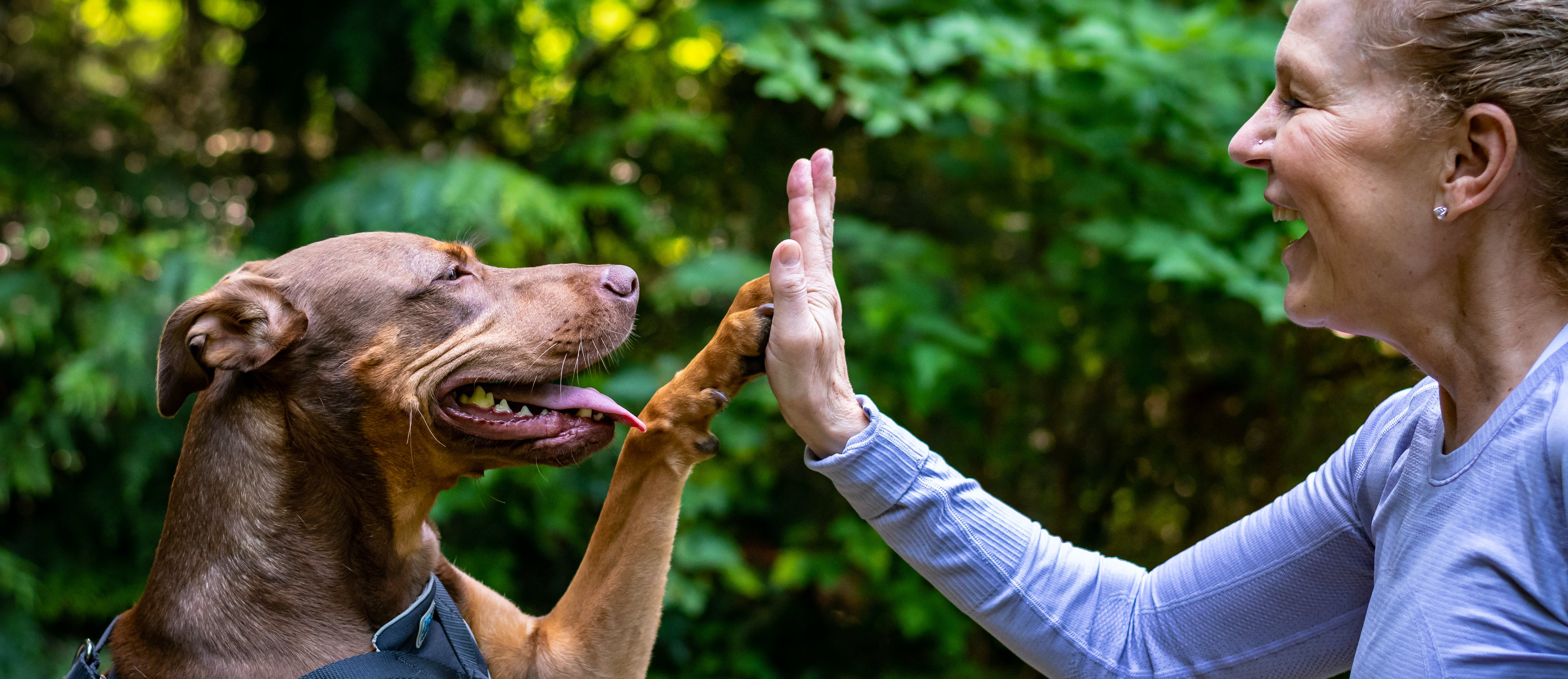 Woman giving a dog a high five
