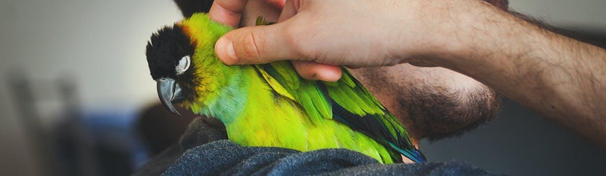 A bright green bird sitting on a man's shoulder