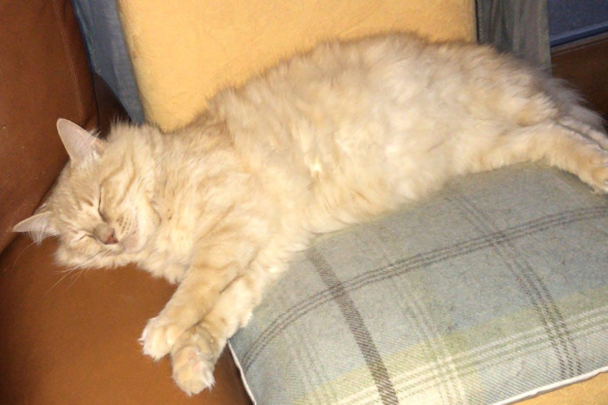 A ginger cat sleeping on an armchair