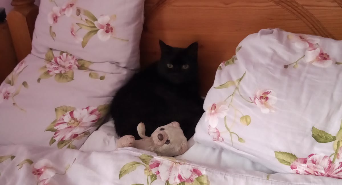 A black cat sat on a floral bed spread