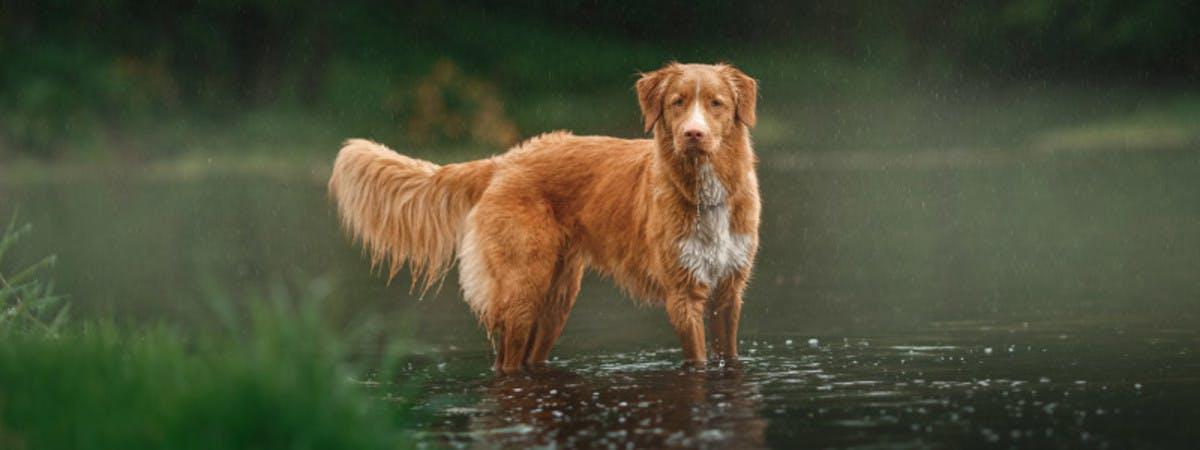 A dog in a lake