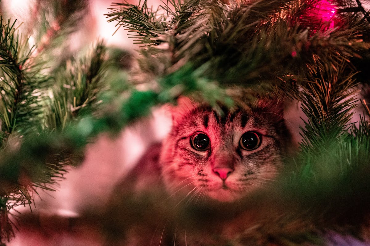 A cat sitting inside a Christmas tree looking alert