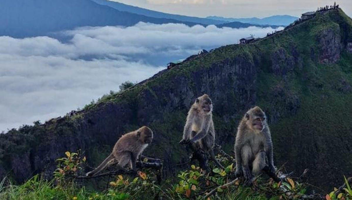 Monkeys at the top of Mt Batur, Bali