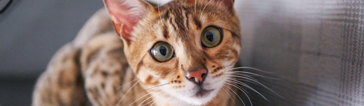 A tabby kitten