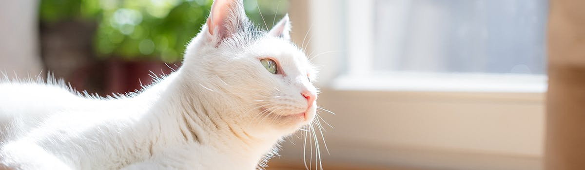 A white cat laying on it's side, looking out of the window