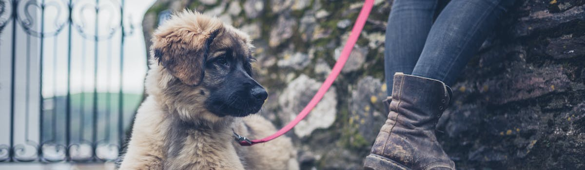 A puppy on a lead sitting at his owner's heel