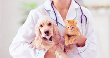 15 Euro für tierärztliche Untersuchungen