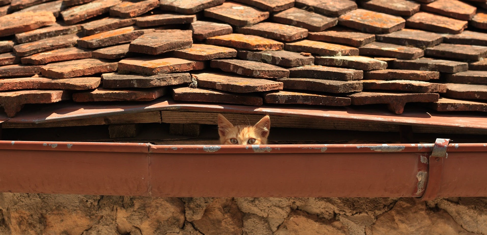 Cat on the rooftop of old house in Transylvania