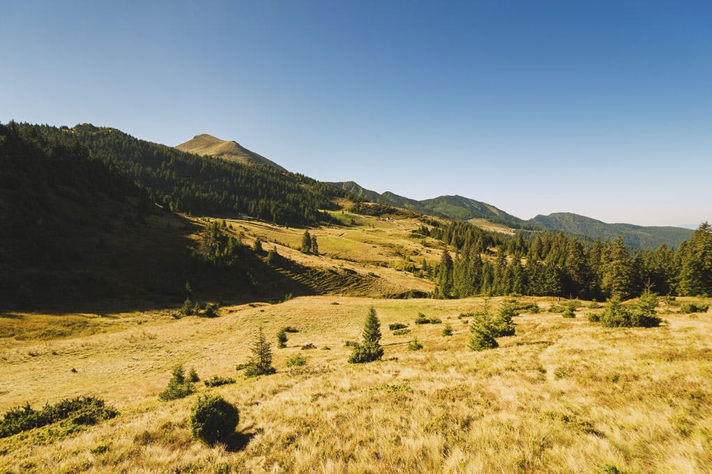 A landscape shot of a field full of dried grass, with trees and rolling hills in the background. The sky is blue.
