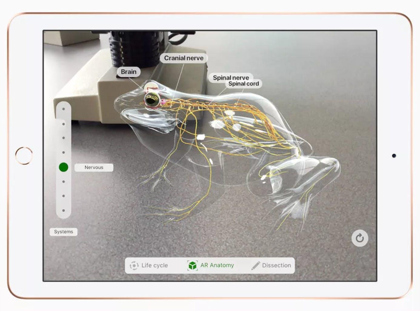 Froggipedia app screenshot