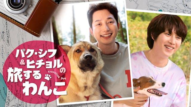 パク・シフ&SUPERJUNIORヒチョル出演『パク・シフ&ヒチョルの旅するわんこ』をU-NEXT独占配信決定