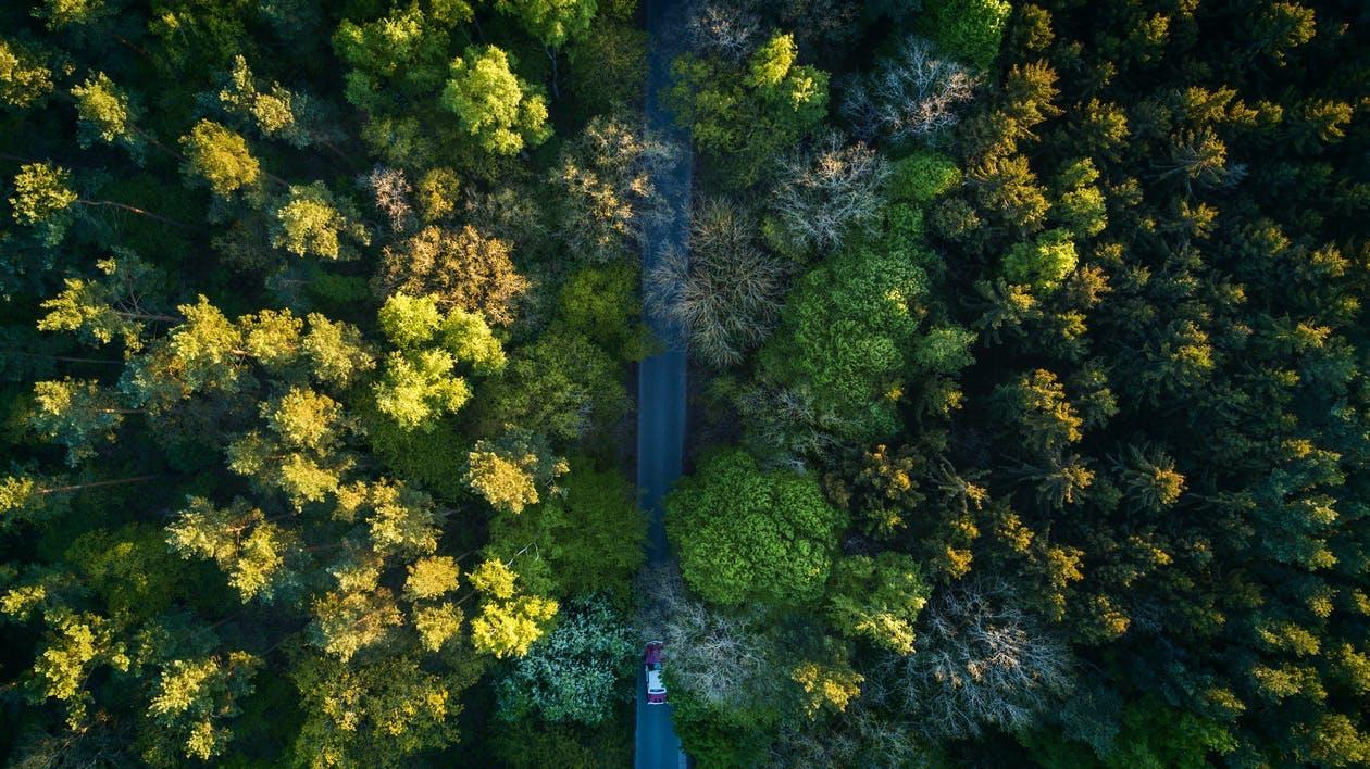 Photos gratuites de aérien, arbres, bois