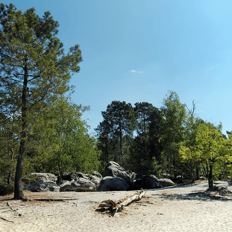 La forêt de Fontainebleau en Île de France