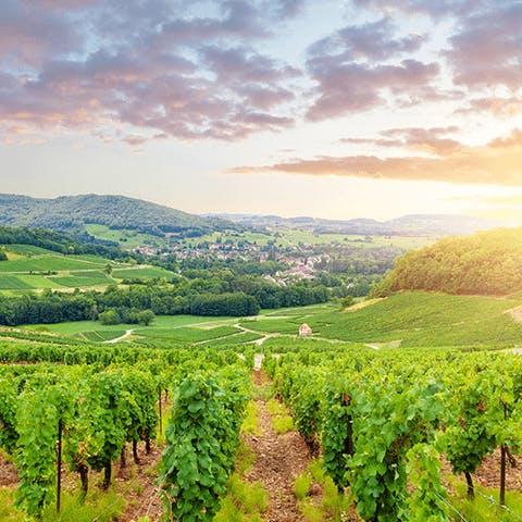 Le charme des vignes de Bourgogne