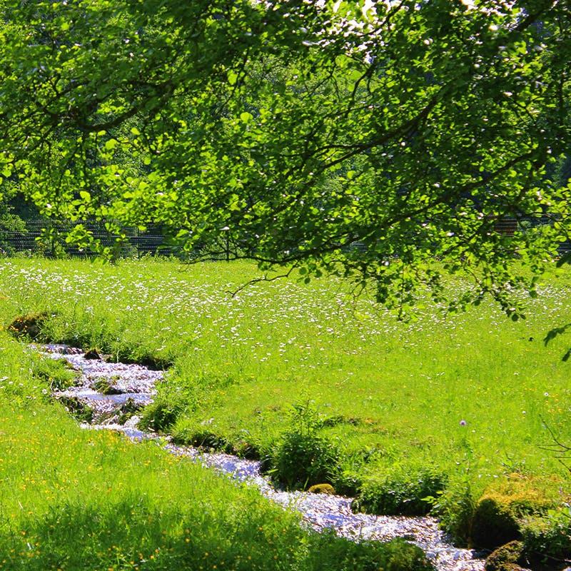 Un ruisseau en Lorraine