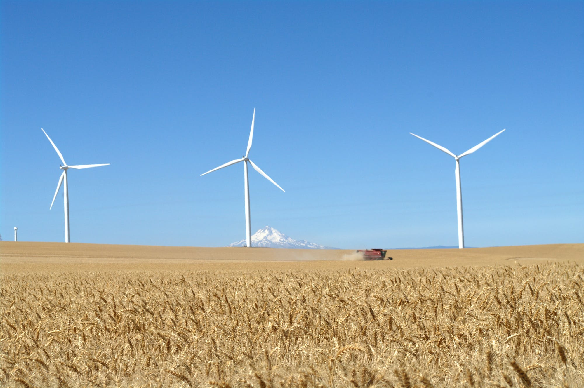 Picture windmills on a field