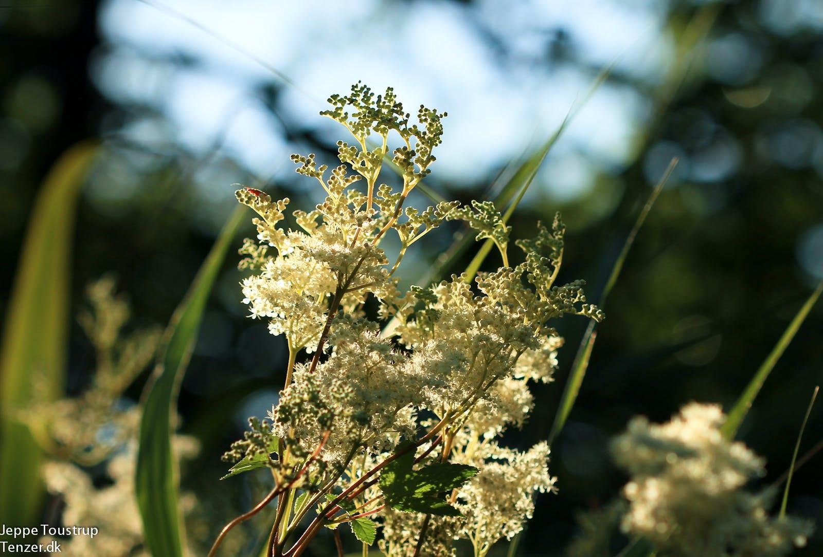 blomst natur gladsaxe