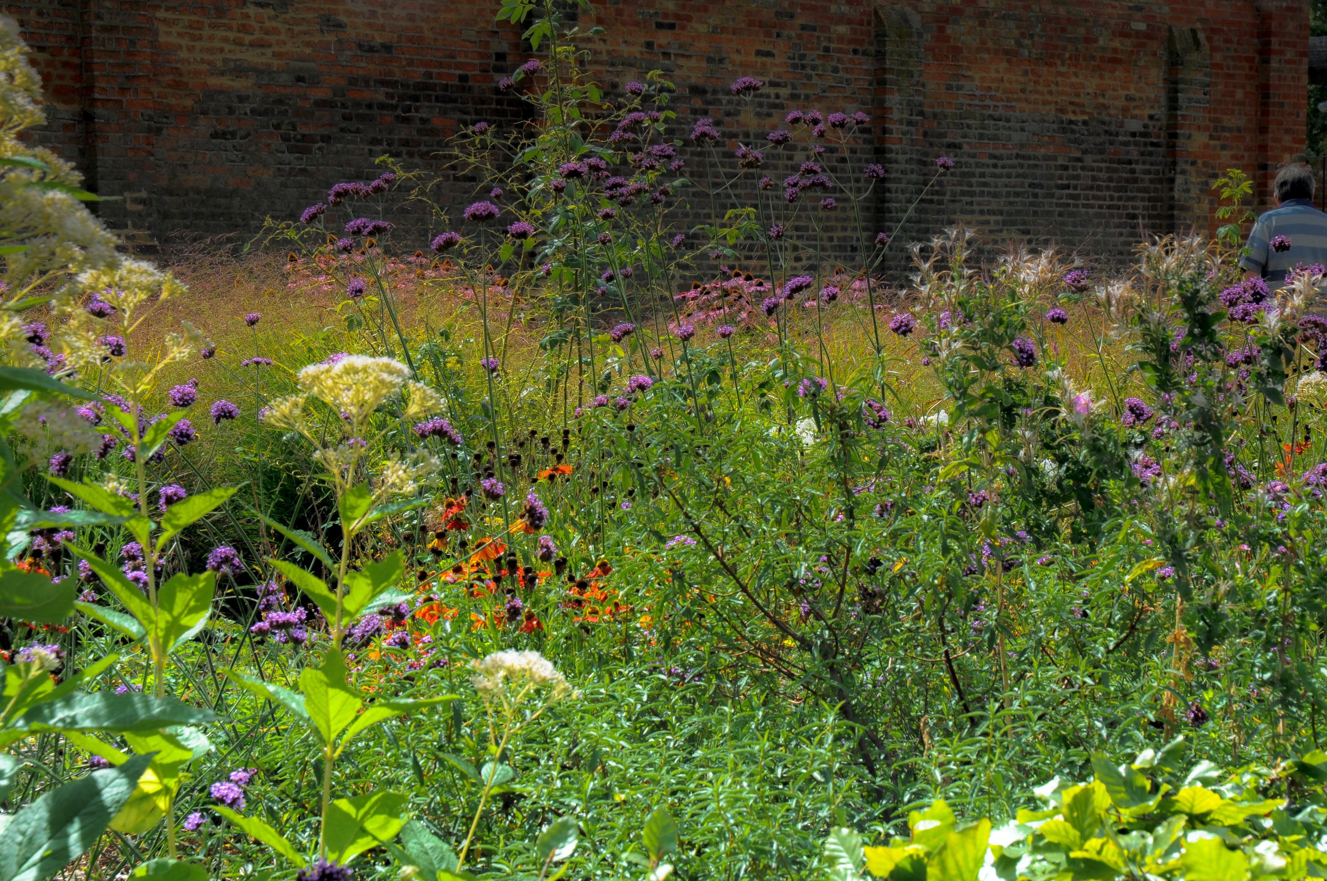 Lad naturen gå sin gang i din have. Insekter, planter og CO2-regnskab vil takke dig for det. Foto: Clive Varley CCBY