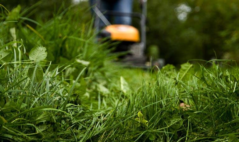 Hvis du vil gøre noget for naturen, så prøv for eksempel at lade et stykke af græsset slippe for plæneklipperen. Foto: CCBY Frida Eyjolfs