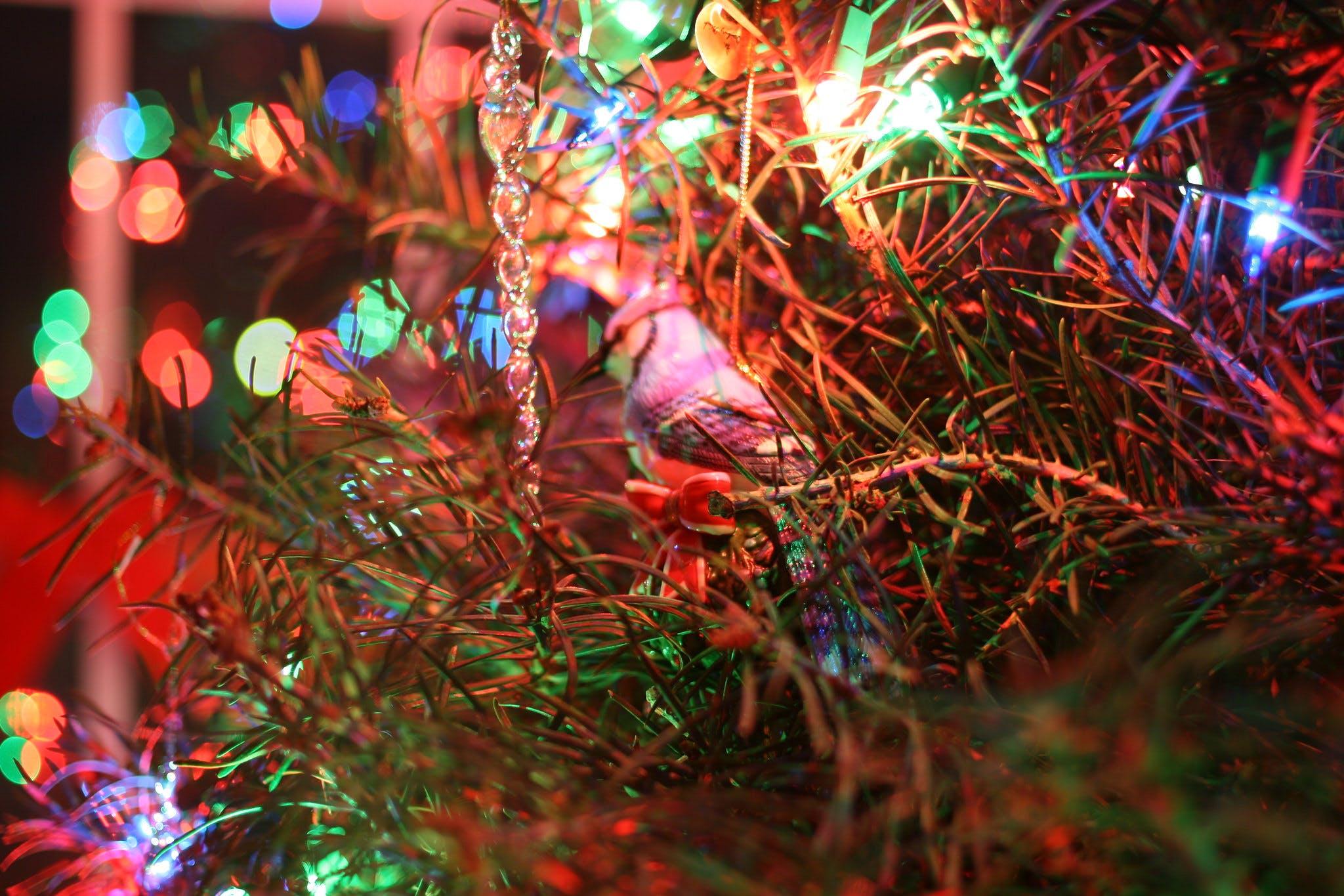 Fair Tree er juletræer, hvor frøene er høstet efter Fair Trade-principper og produceret økologisk. Foto: CCBY Stephen Butler.