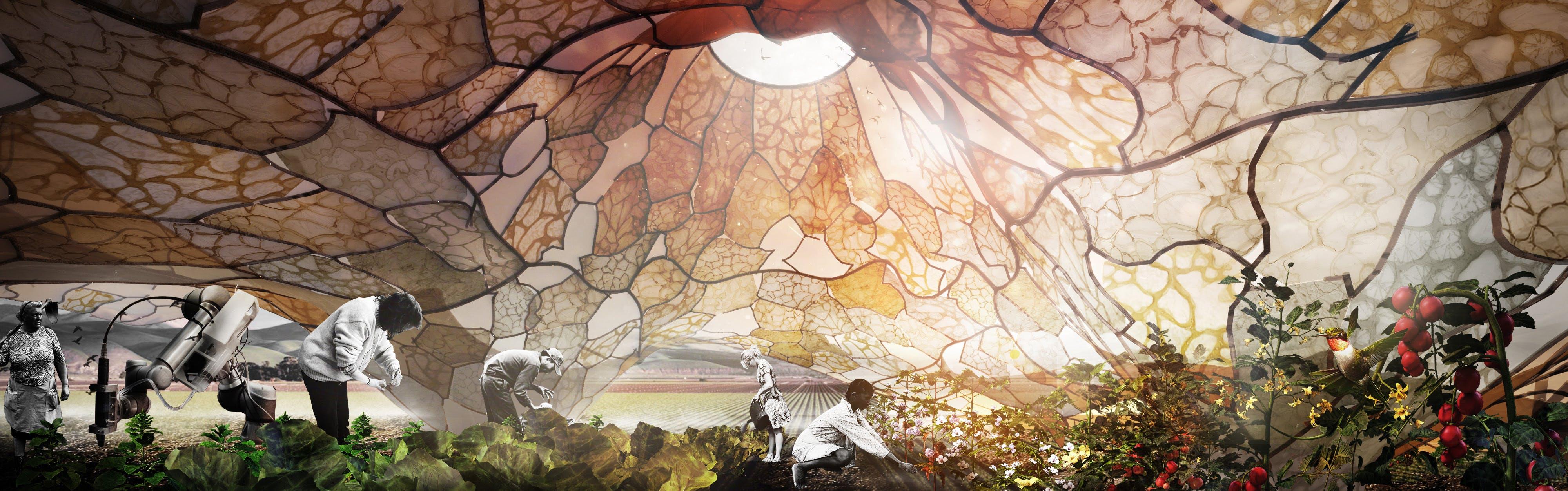 Bioplastikfilm kan bruges til at beskytte planter i overdækkede landbrug. Det er en af de nye klimaløsninger, der bliver udstillet på KADK – Det Kongelige Danske Kunstakademis Skoler for Arkitektur, Design og Konservering. Foto: KADK
