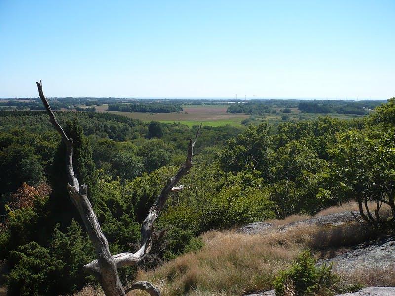 Almindingen på Bornholm er en af de skove, der bliver mere naturlige. Foto: CCBY Alex