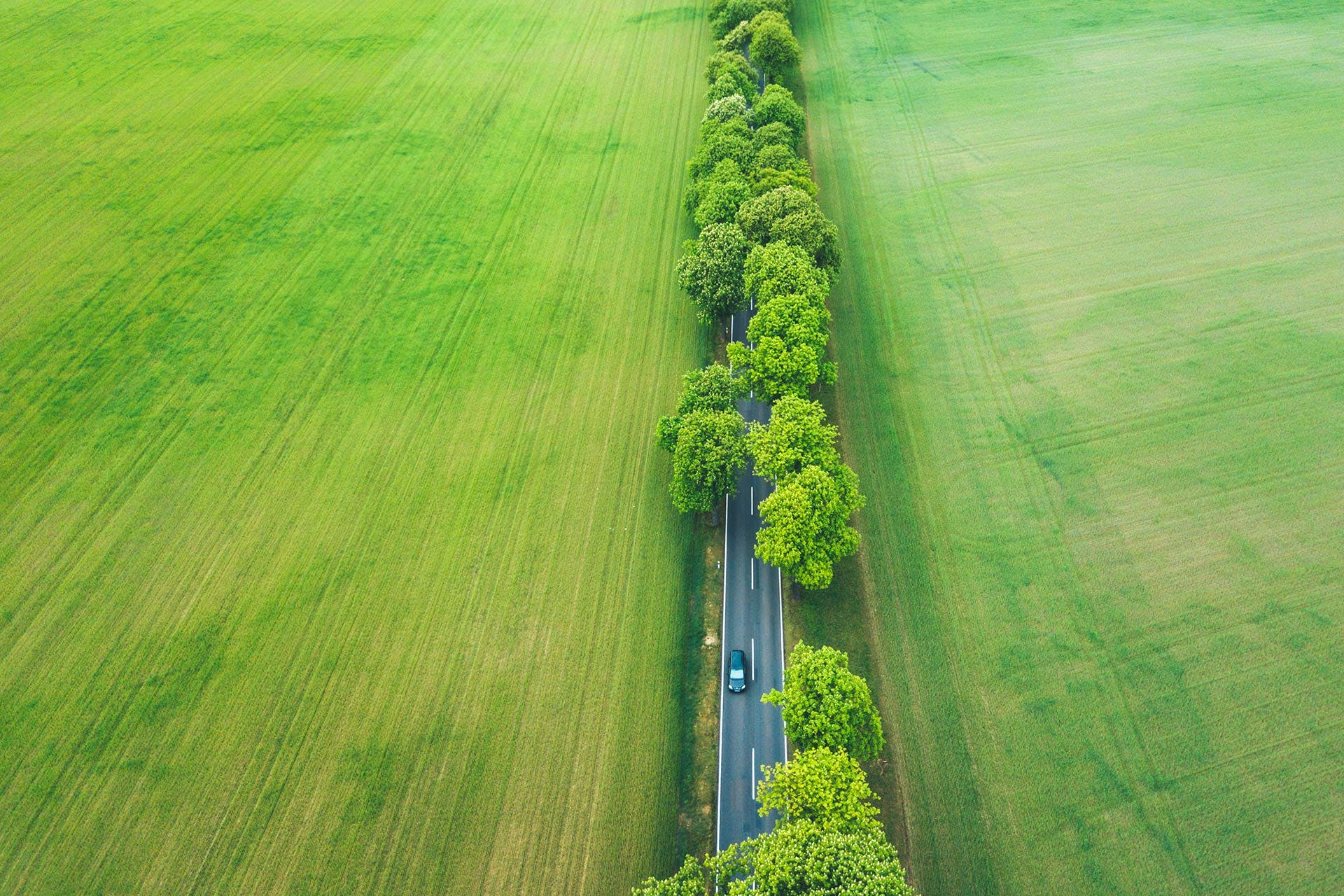 Bird's eye view: A car drives through an avenue surrounded by green fields.