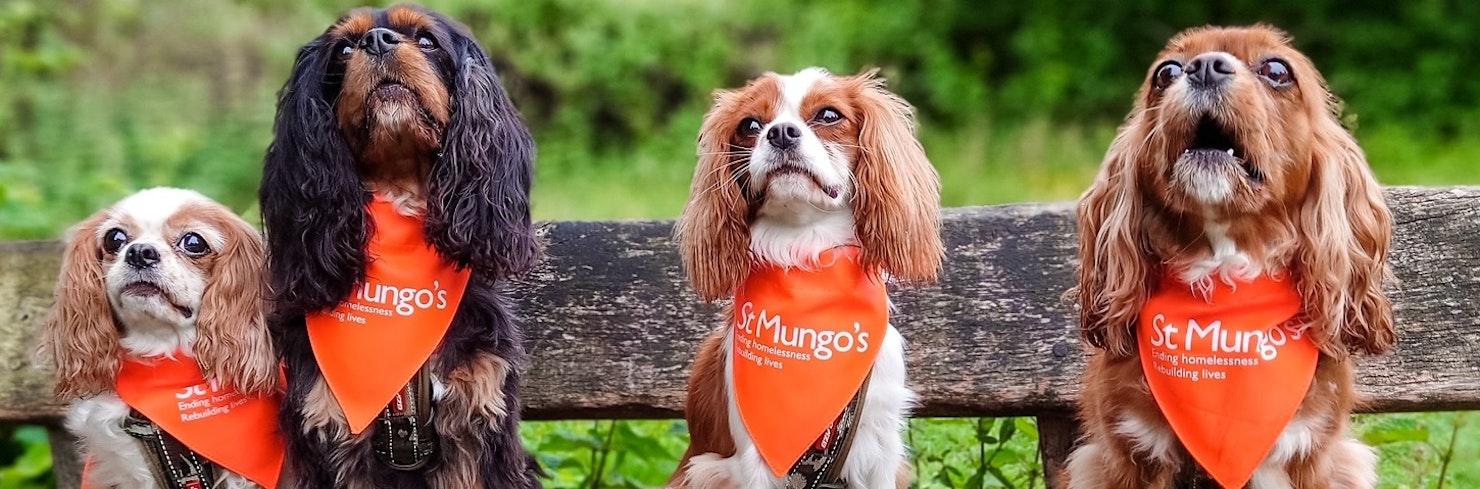 Four dogs sitting in a row, all with St Mungo's bandanas around their necks.