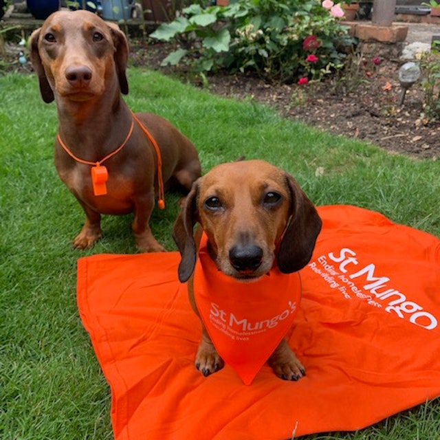 Picture of two dogs on a St Mungos tshirt