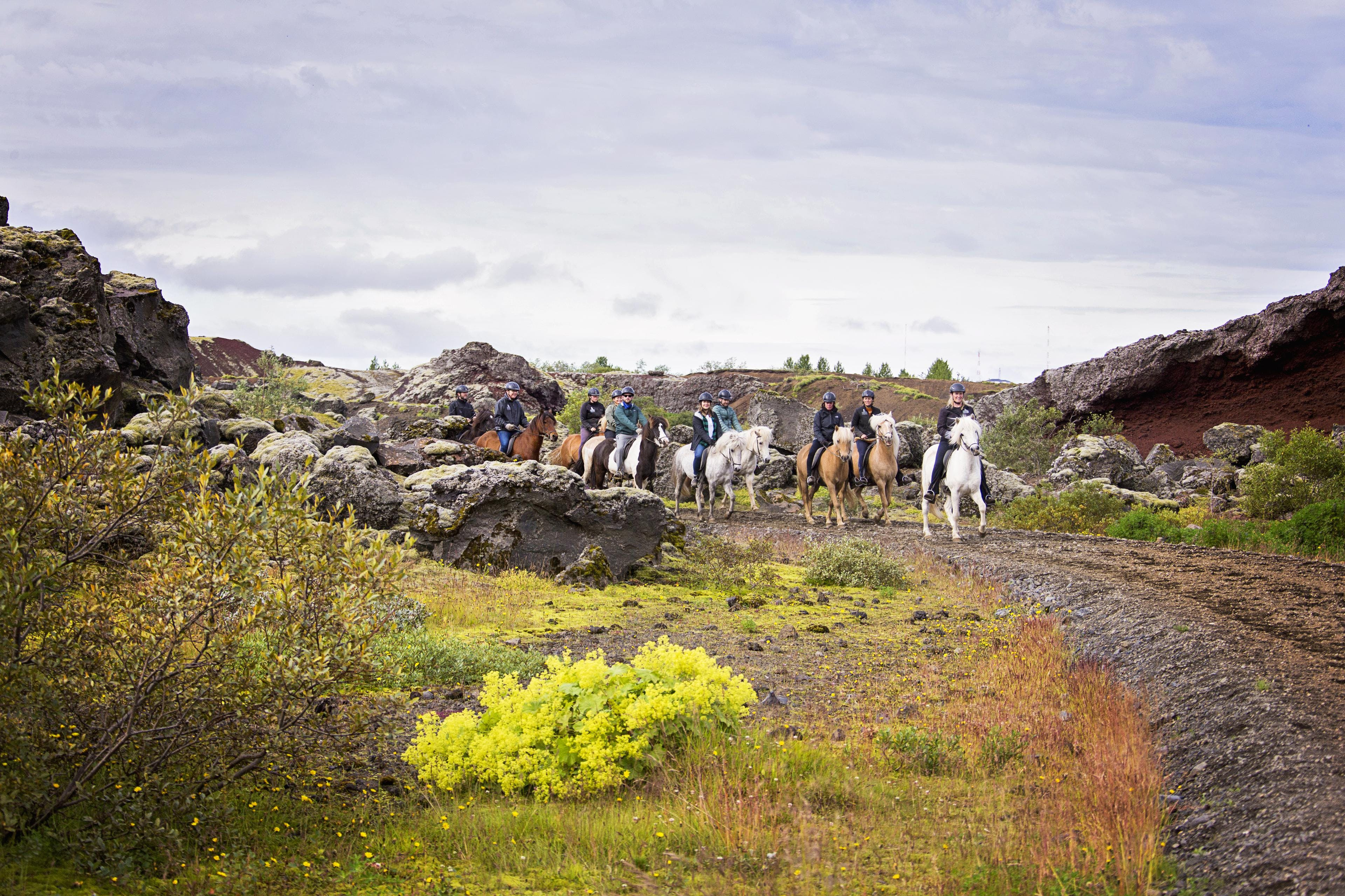 A group riding horses in Icelandic nature