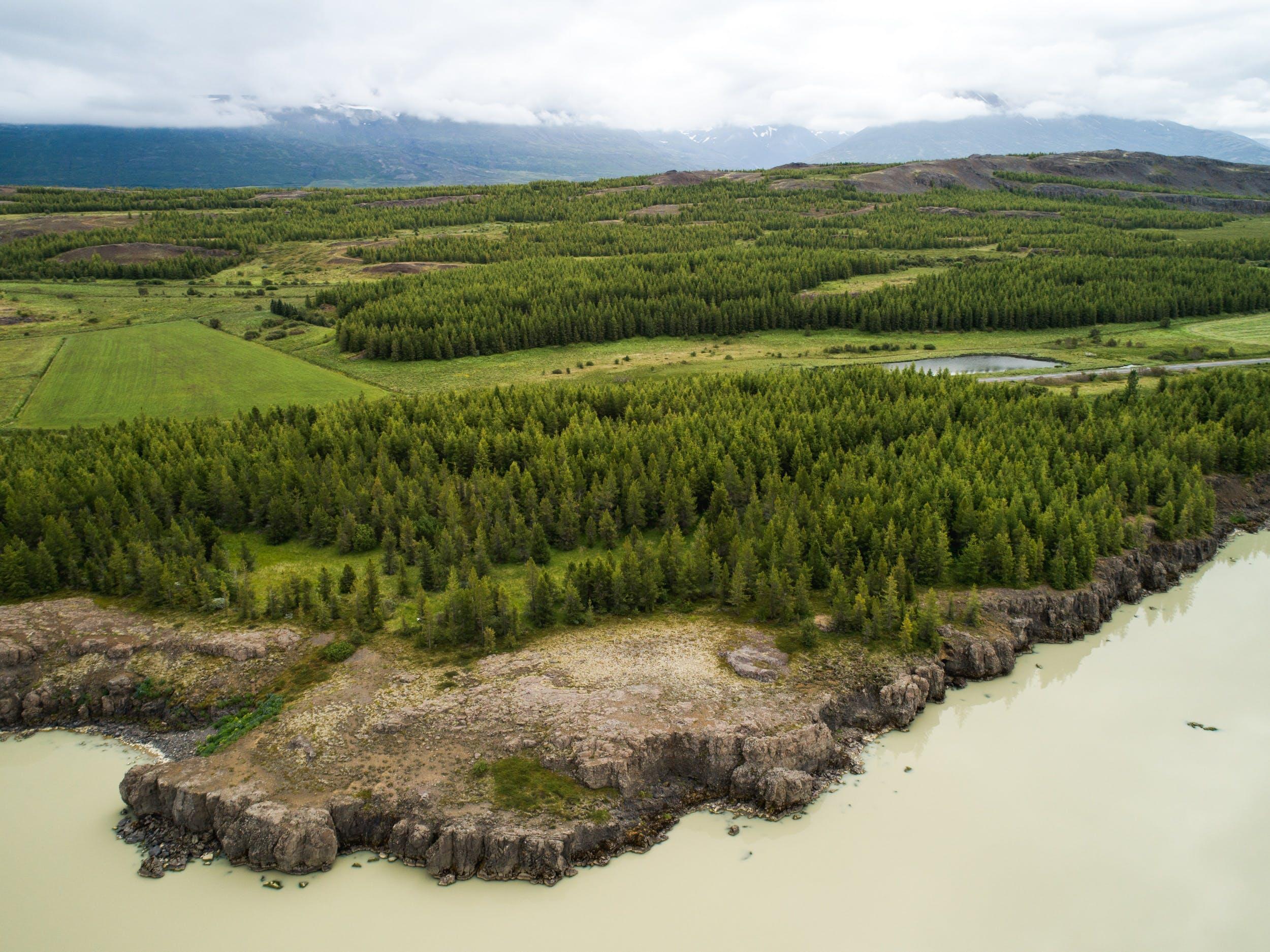 Hallormsstadaskogur in East Iceland