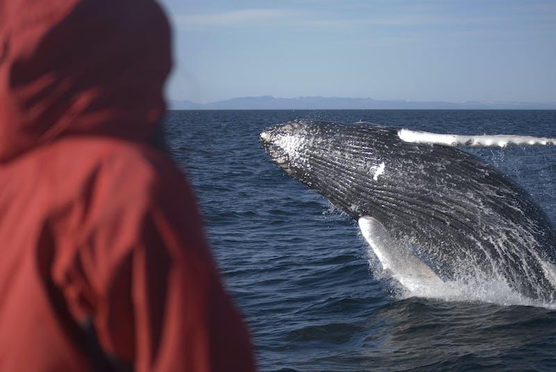 A man viewing a whale