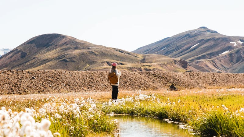 A woman surrounded by mountains and flowers in Iceland