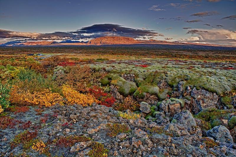 Þingvellir National Park in autumn colours