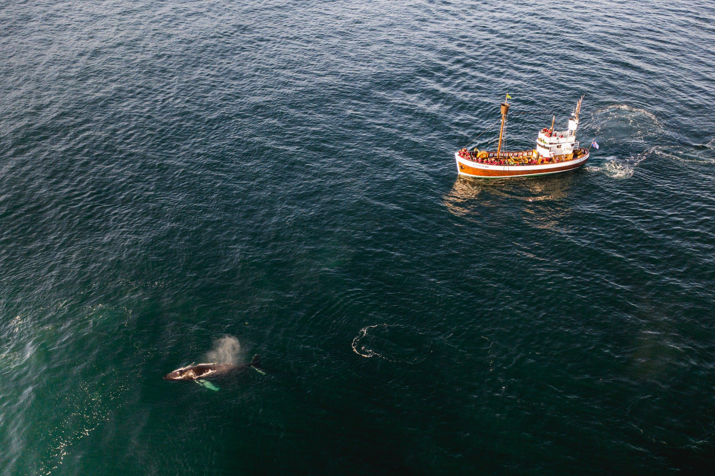 Whale watching boat by Húsavík