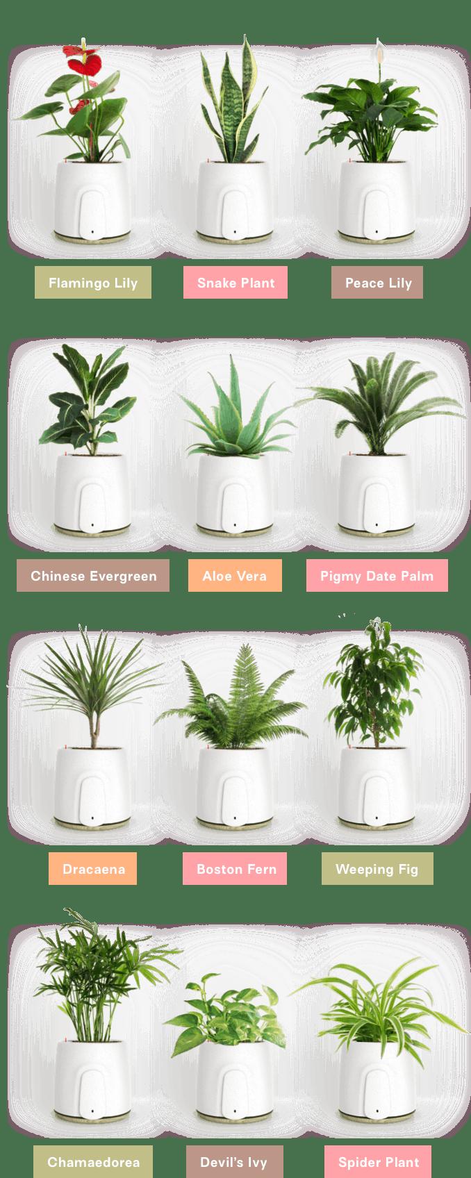 natede plants