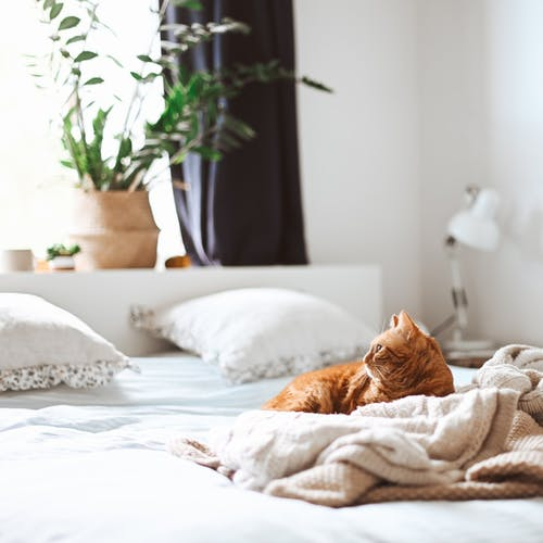 Do air purifiers work for pet allergies?