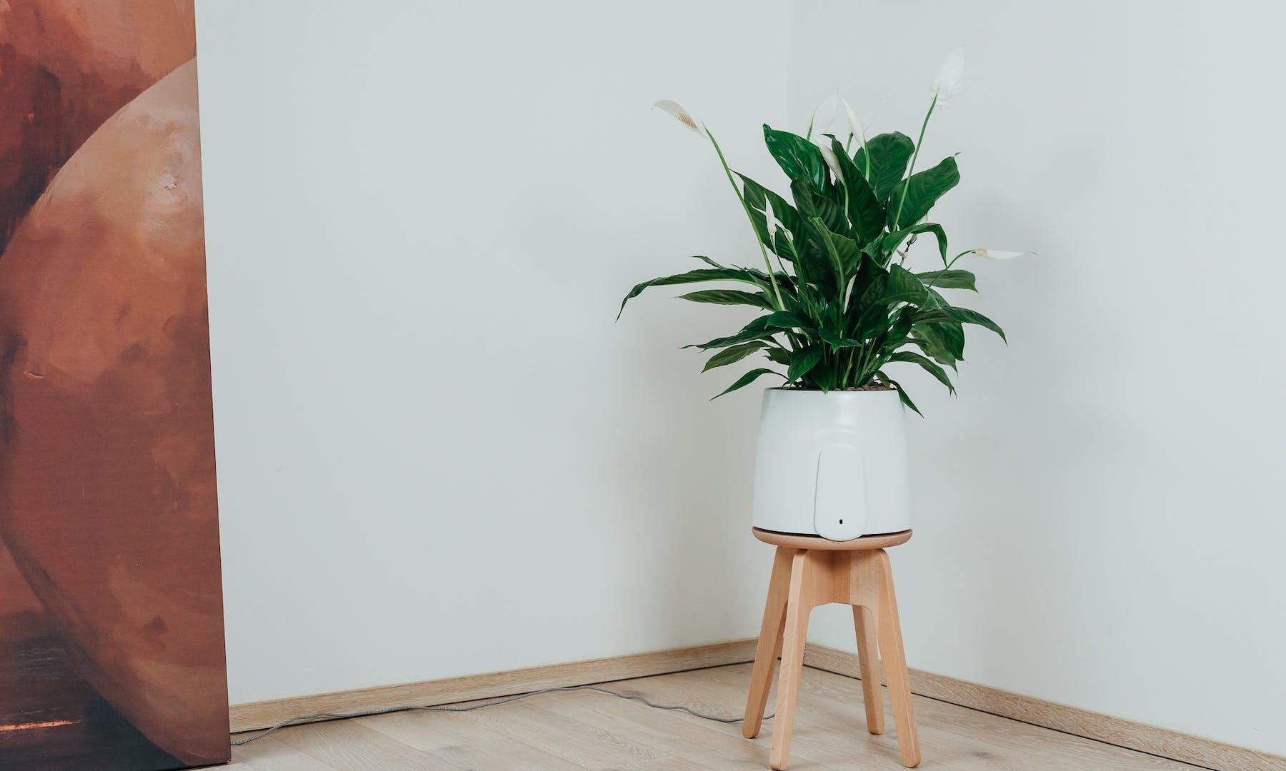 Natede può migliorare la qualità della mia aria?